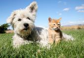 Vorschaubild zu Artikel: Demnächst: Frühjahrs-Kur für Hunde & Katzen