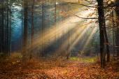 Vorschaubild zu Artikel: Zeit für die Herbst-Kur