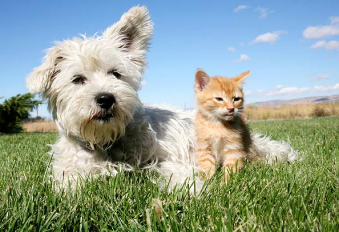 Titelbild: Demnächst: Frühjahrs-Kur für Hunde & Katzen
