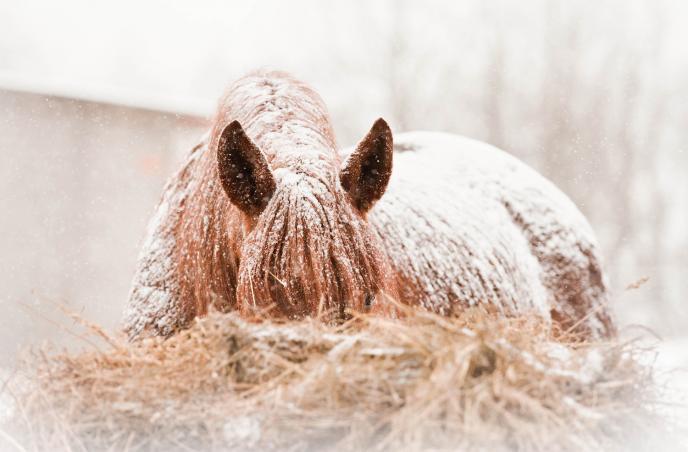 Titelbild: Sommerekzemer behandeln im Winter