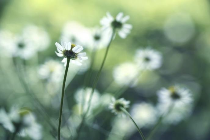 Titelbild: Kräuter für den Fellwechsel im Frühling