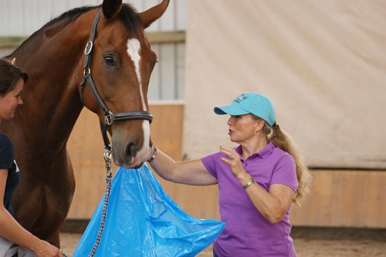 Mary Ann Simonds arbeiten mit und an einem Pferd